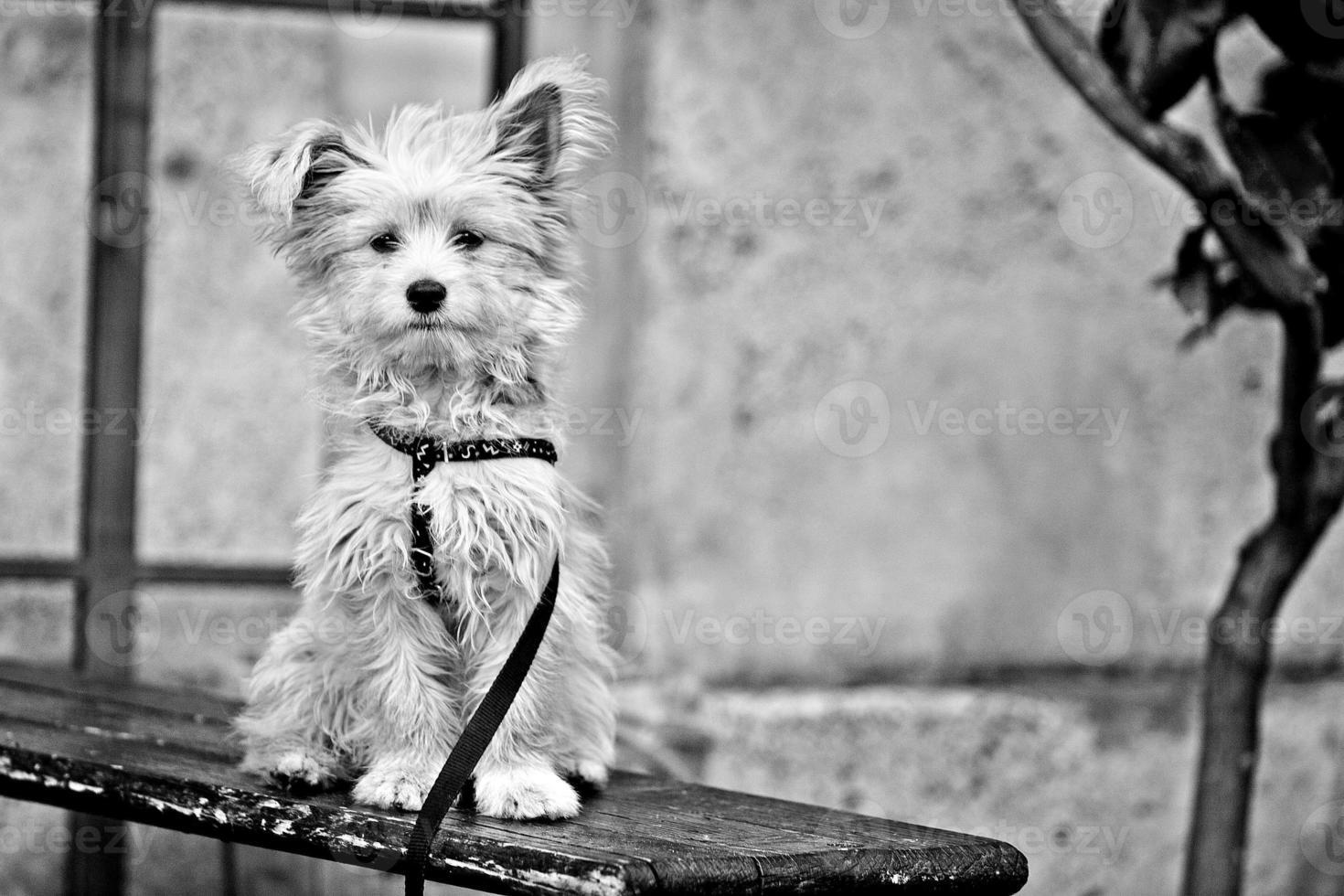 söt hund med koppel foto