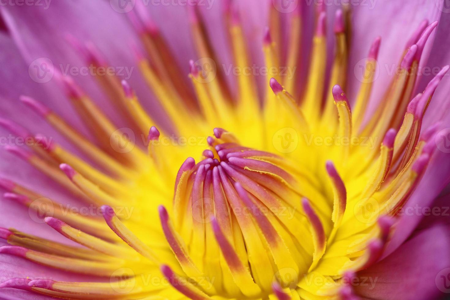 lotus i botanisk trädgård foto