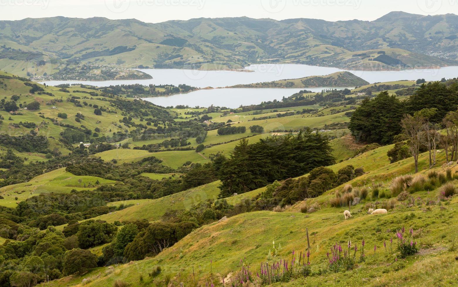 kust vid Akaroa i Nya Zeeland foto