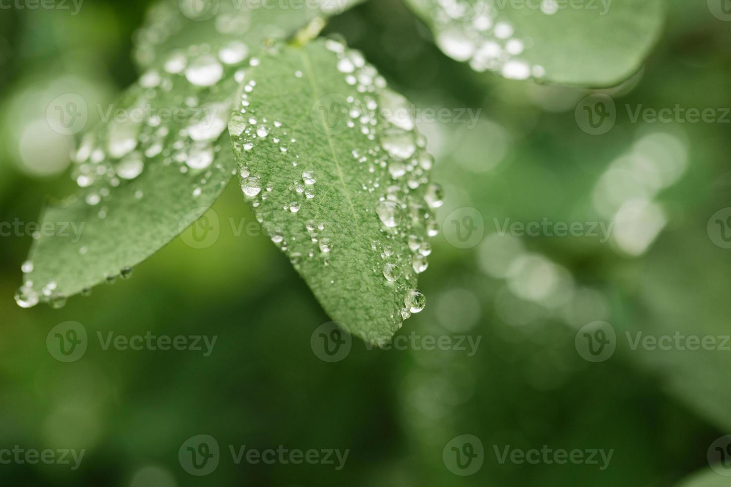 regndroppar på gröna blad foto