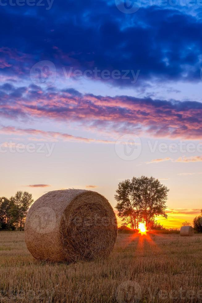 solnedgångsfält, träd och höbal foto