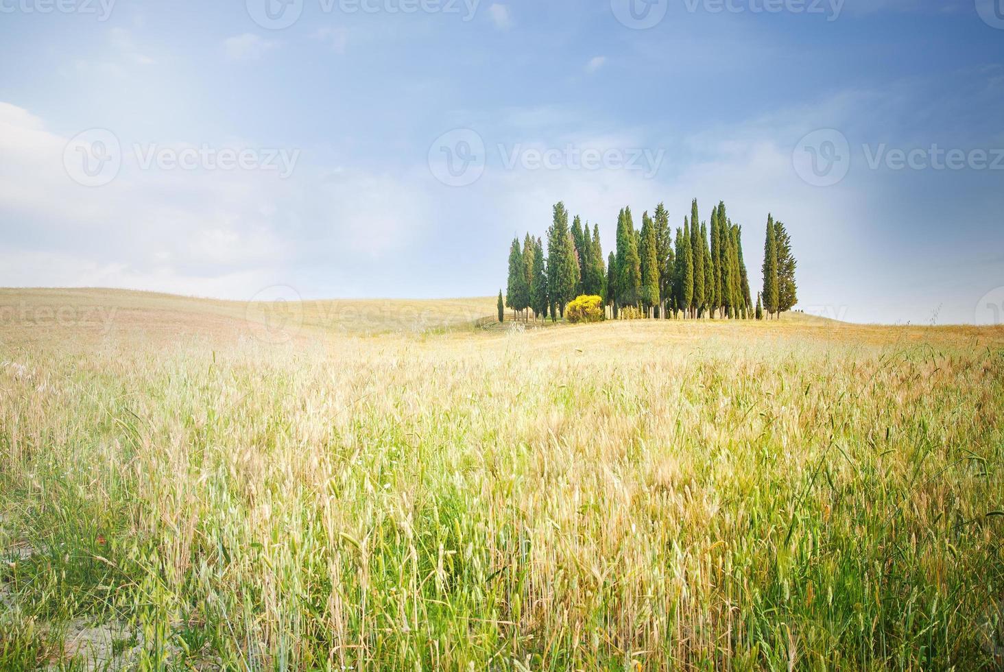 färgglada fält och cypresser i Toscana, Italien foto