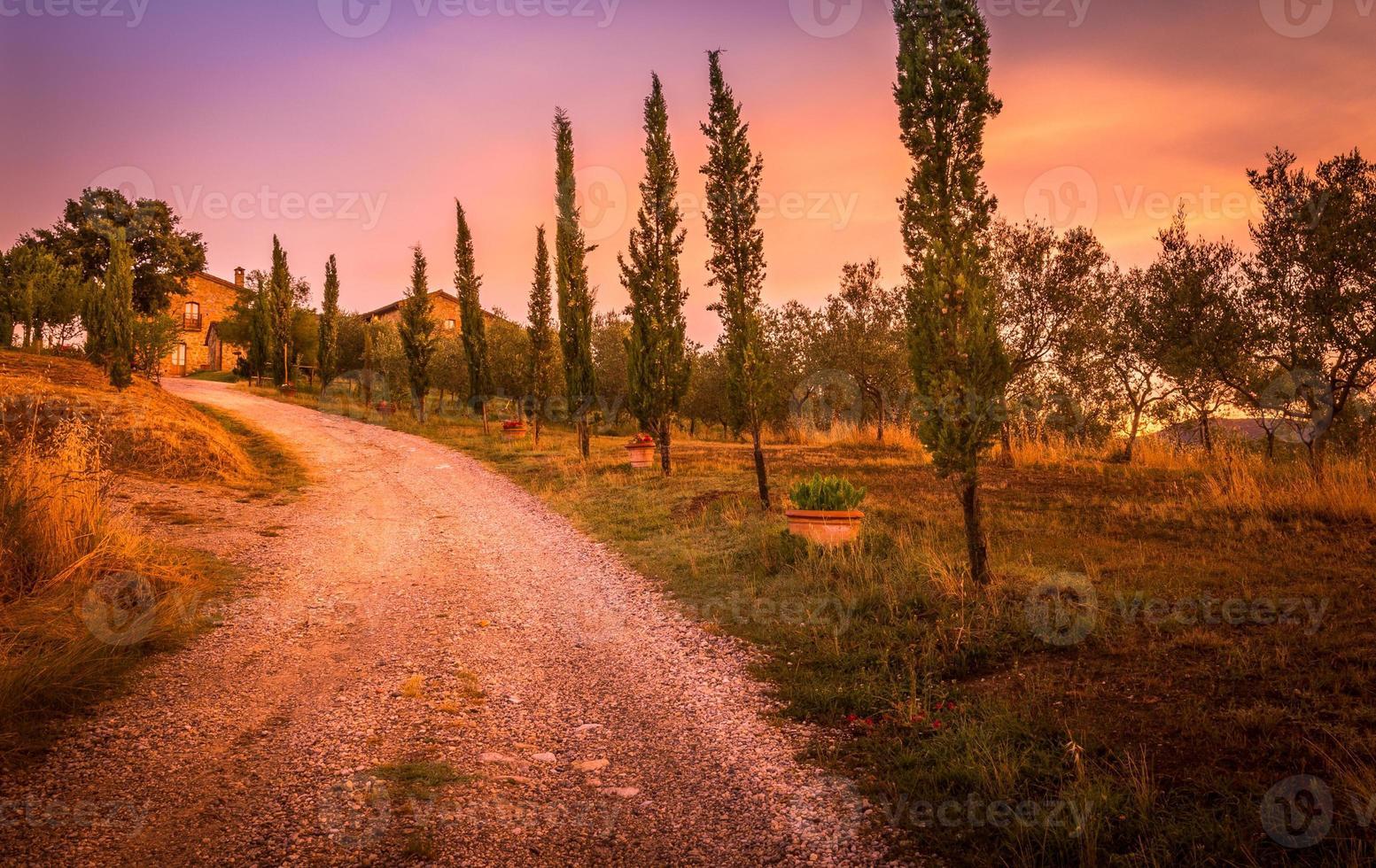toskansk cypress foto