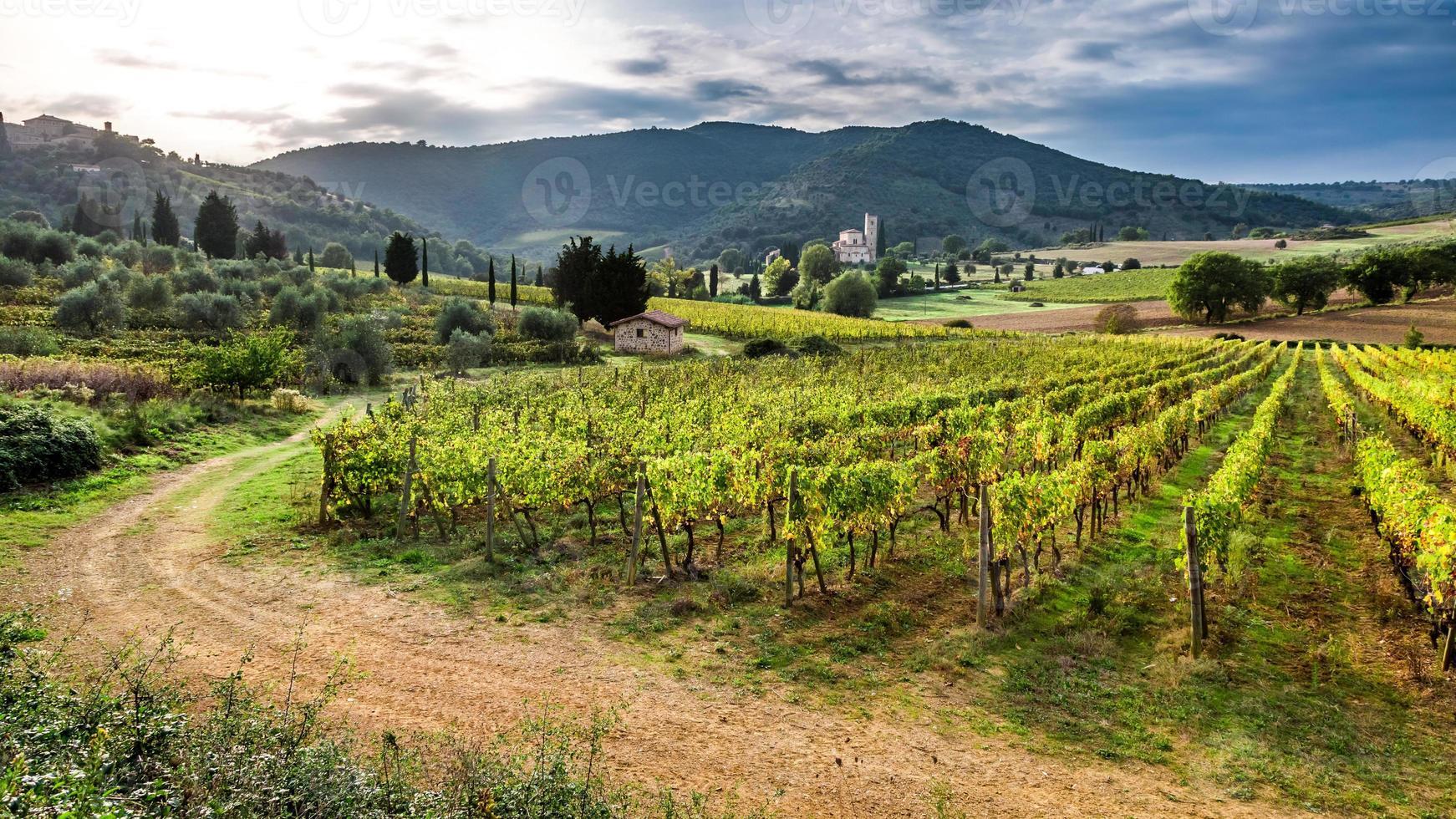 vacker solnedgång över en vingård i Toscana foto