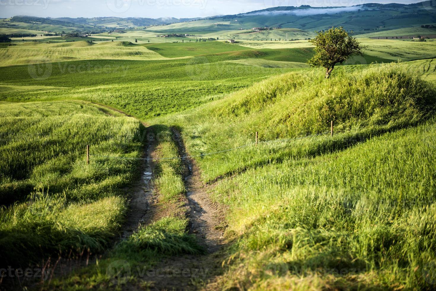 morgon på landsbygden i Toscana foto