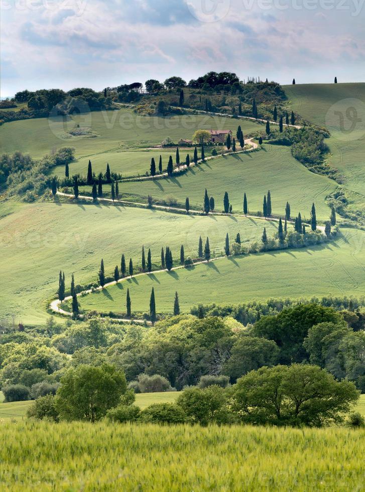krökt väg i Toscana foto
