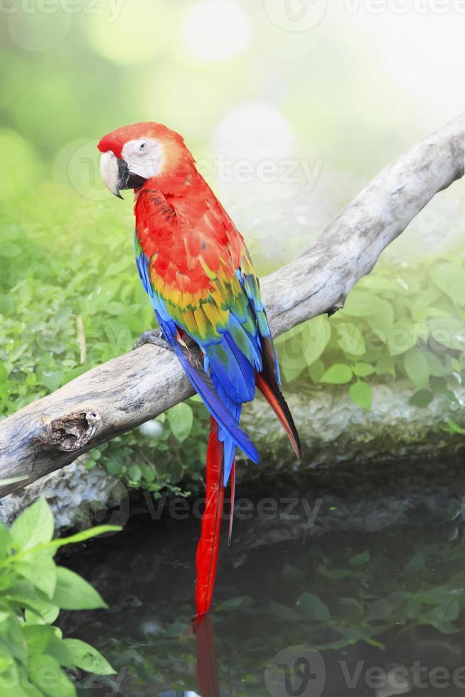papegoja fågel sitter på abborre foto