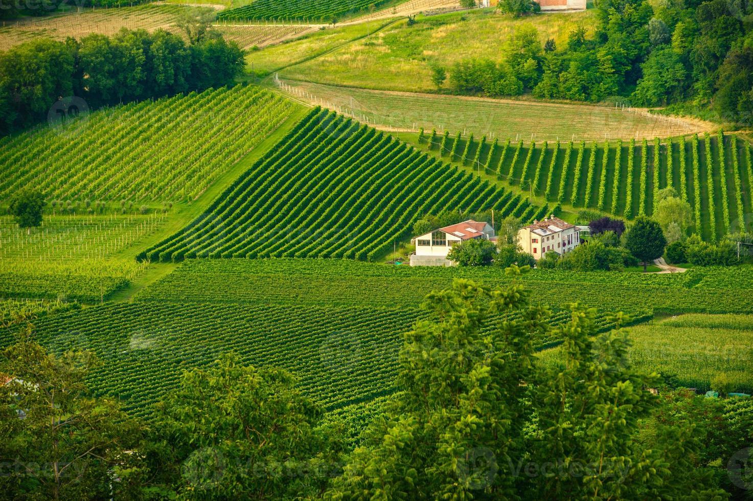 vingårdar i Vittorio Veneto, Treviso foto