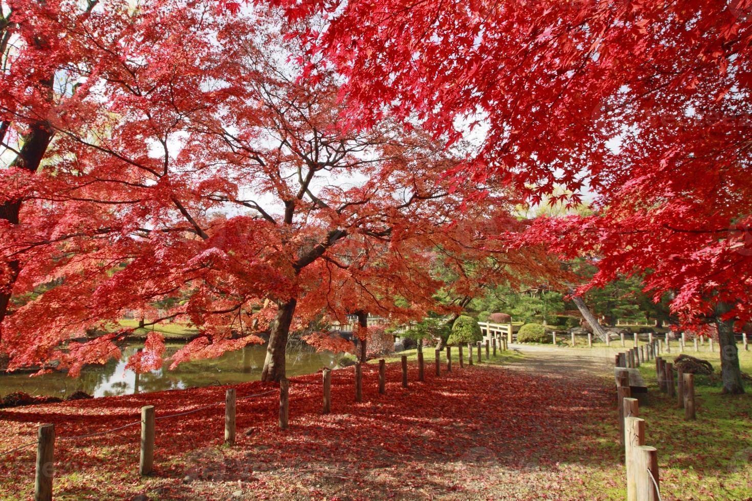 färgglada löv foto