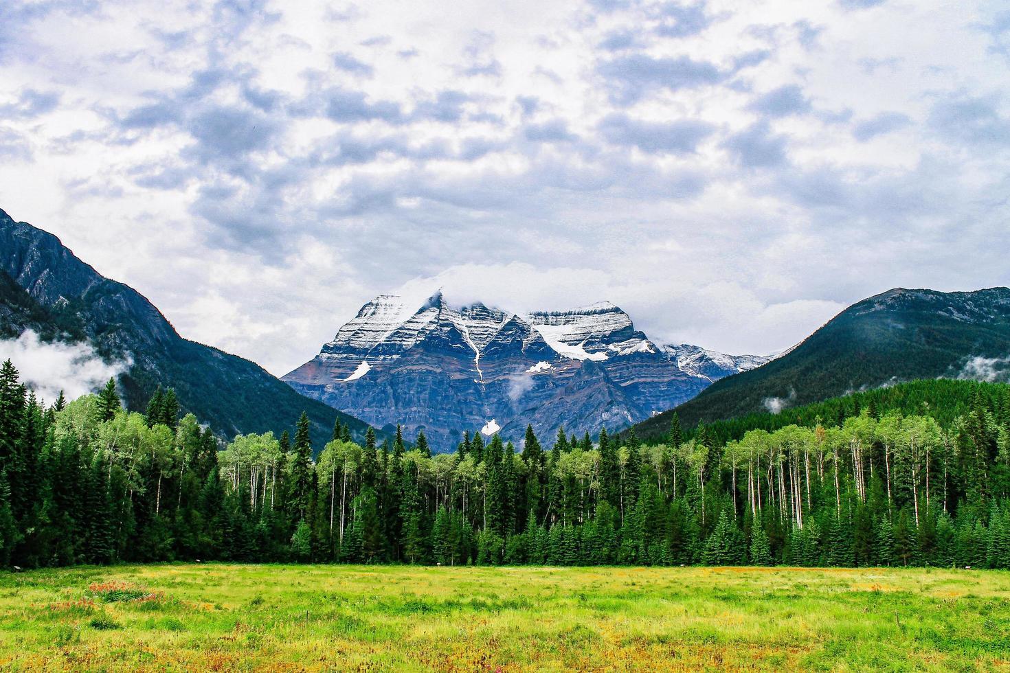 öppet fält framför en skog och berg foto