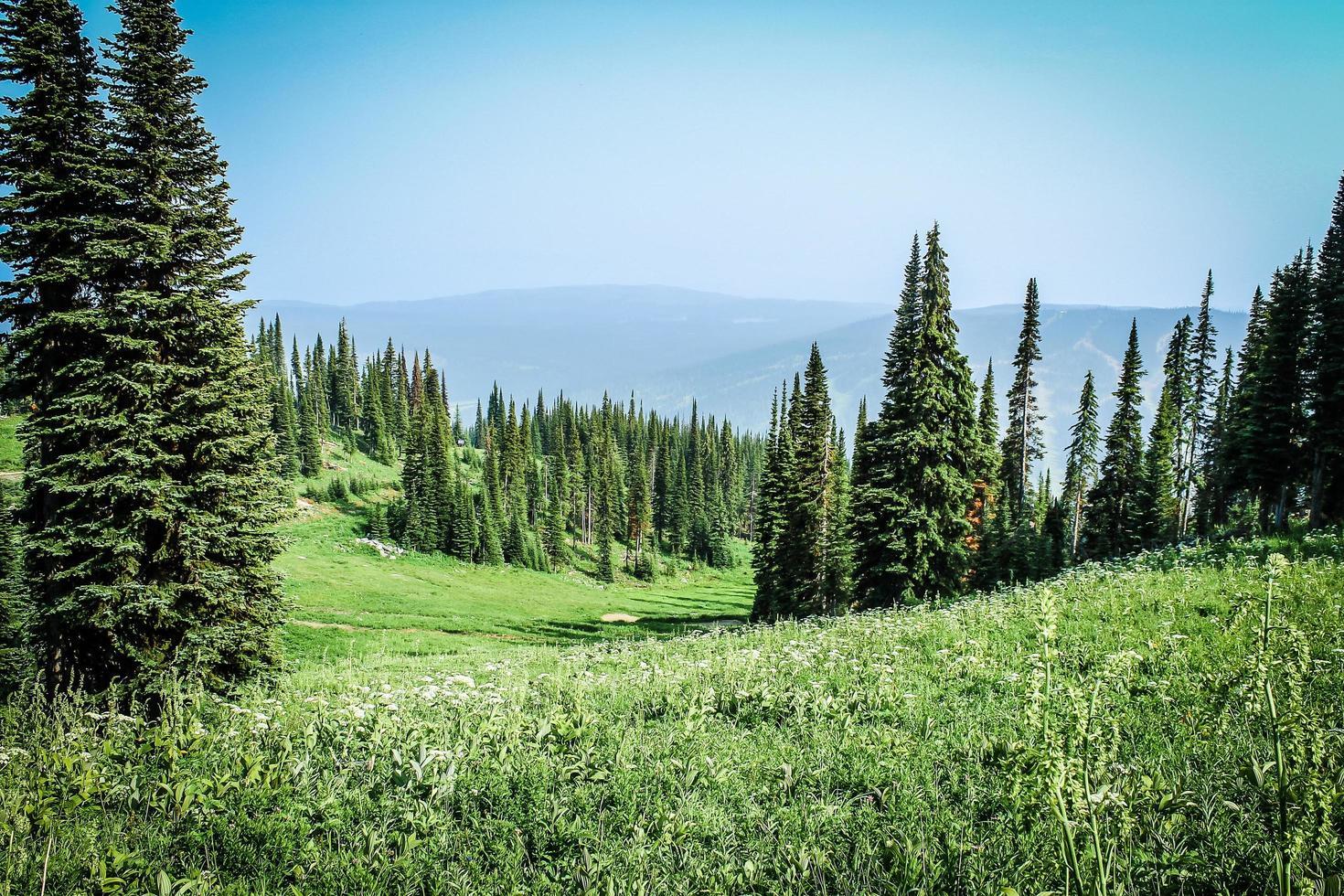 gräsbevuxen åker med träd foto