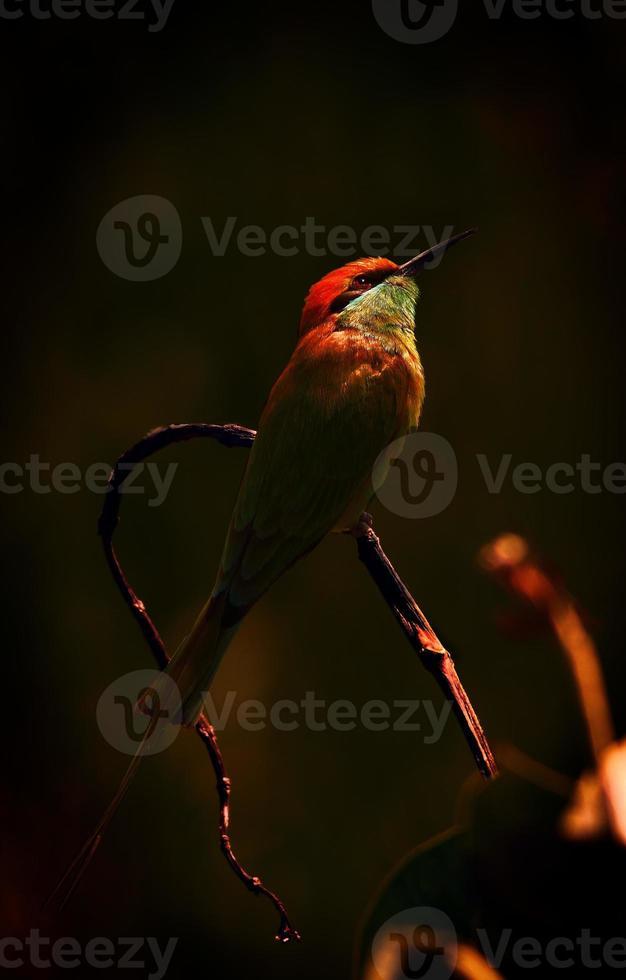 fågelskådning i solbadet foto