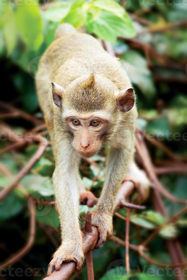 apa på gren av tropiskt träd foto