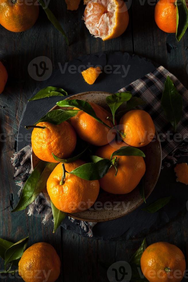 råa organiska satsuma apelsiner foto