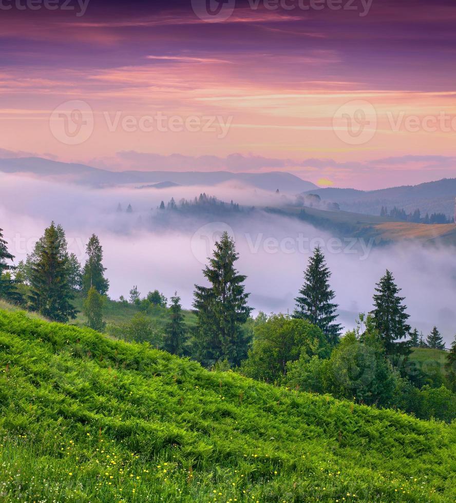 dimmig sommarmorgon i bergen. foto