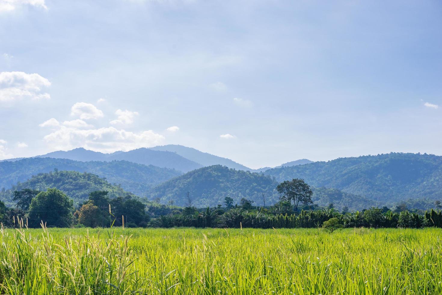 berg och grönt fält på landsbygden foto
