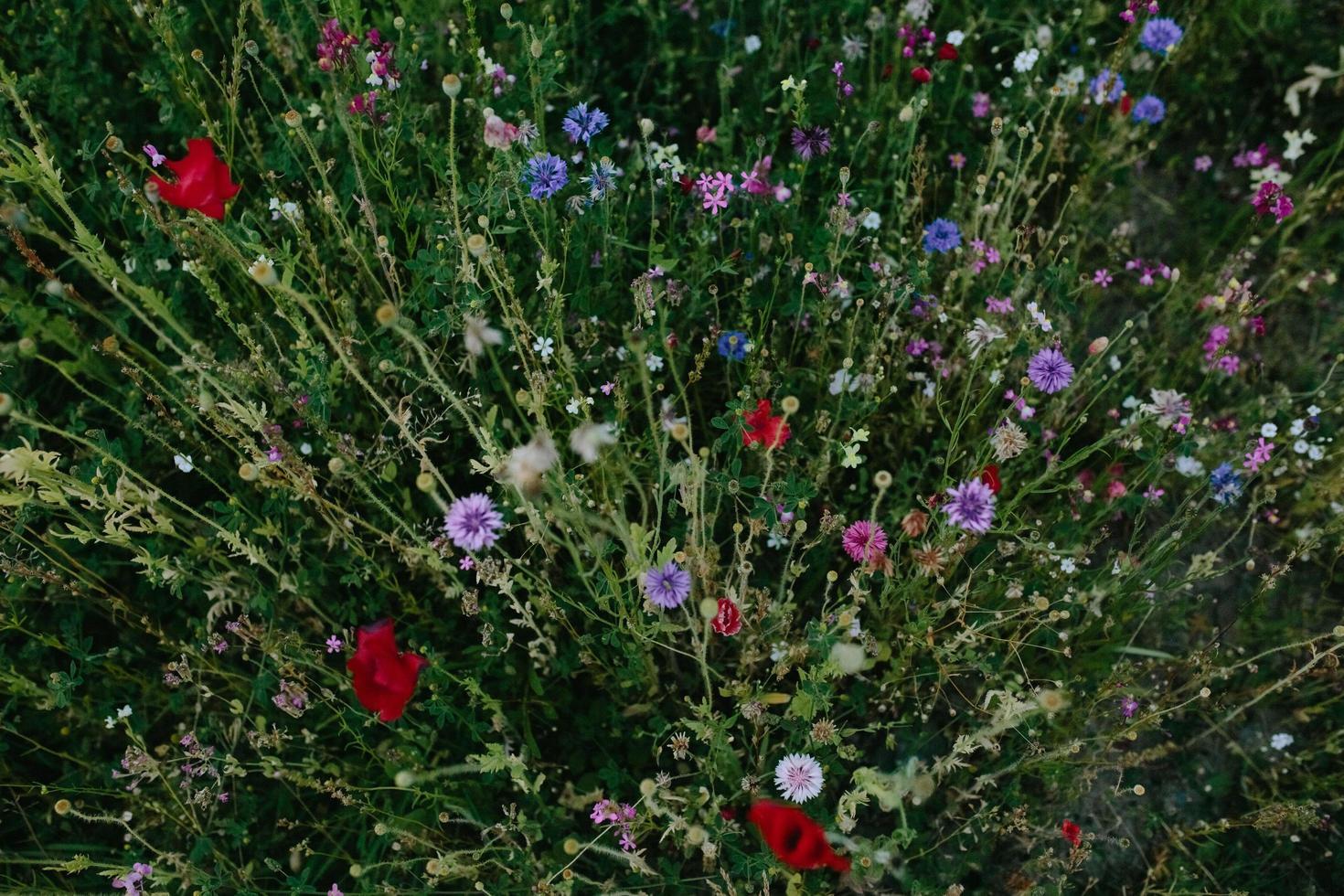 lila och vita blommor med gröna blad foto