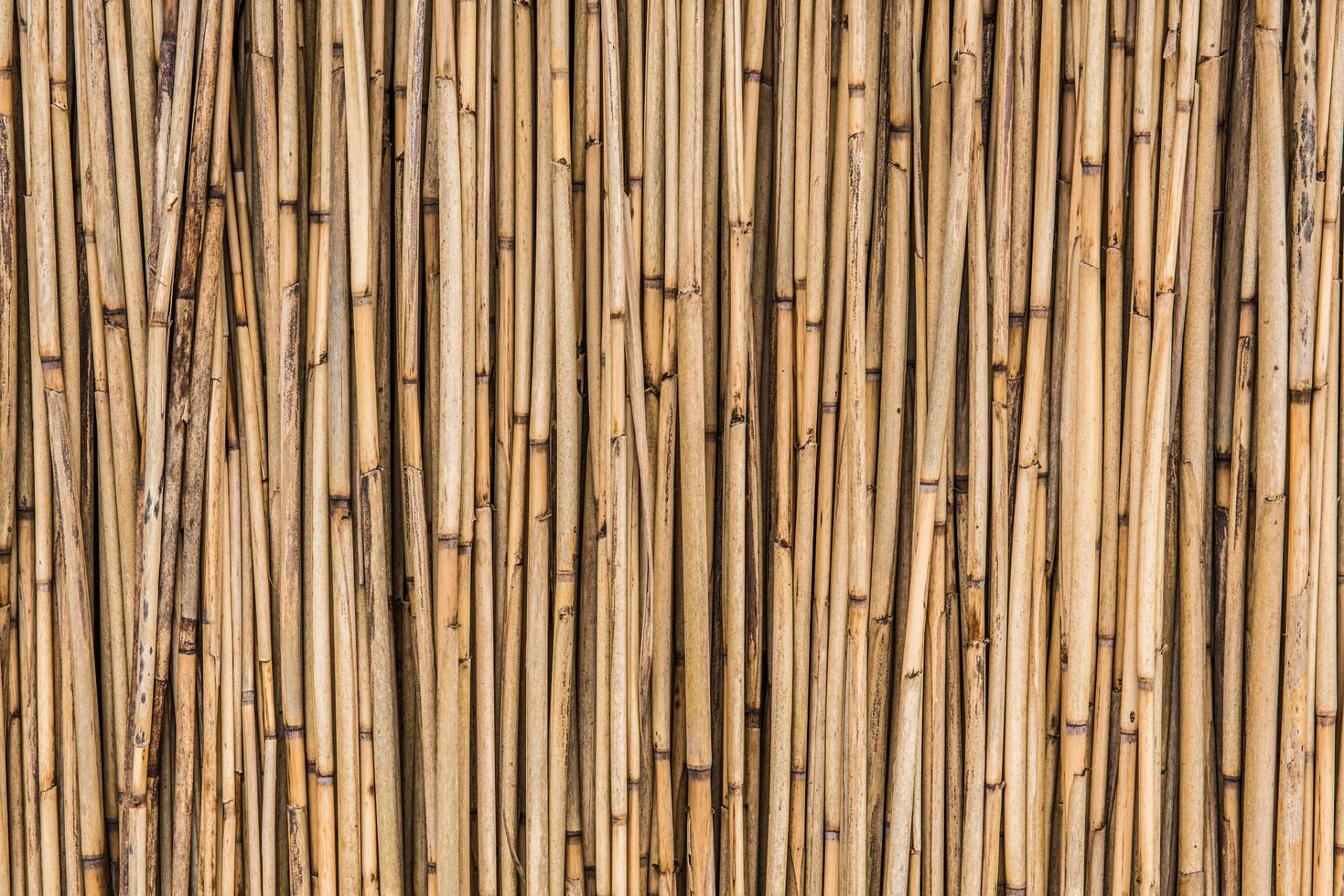 bambu stick bakgrund foto