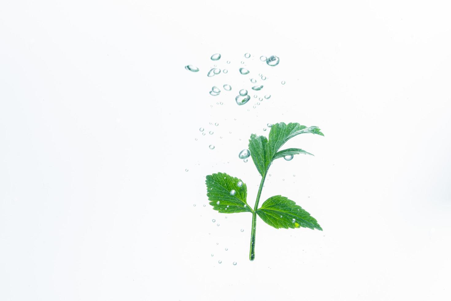 grön växt och bubblor i vattnet foto