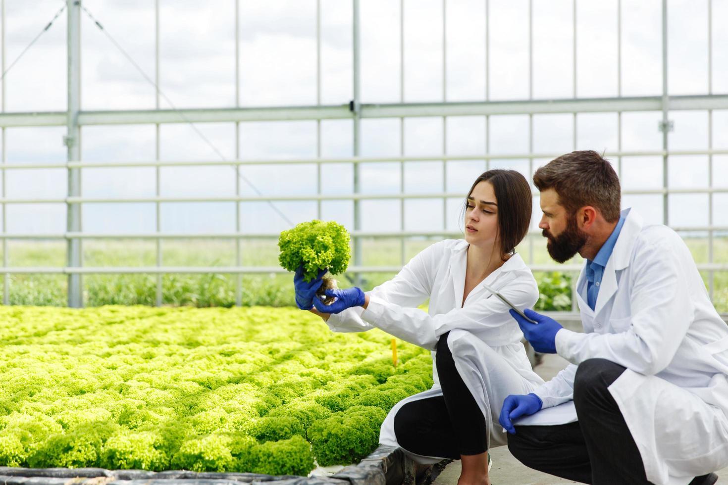 kvinna och man i laboratoriekläder undersöker växter foto