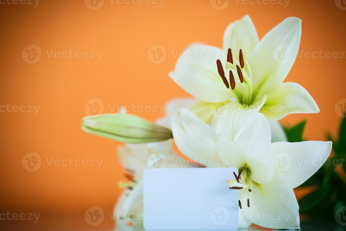 vit lilja foto