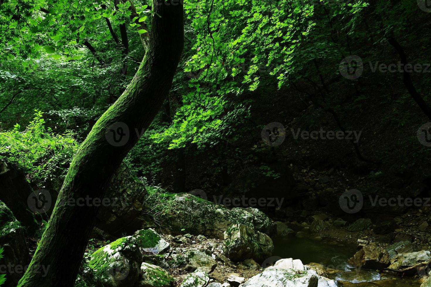 grön mossa foto