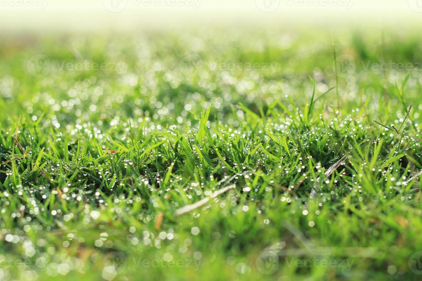 dagg på grönt gräs under morgonsolen. foto