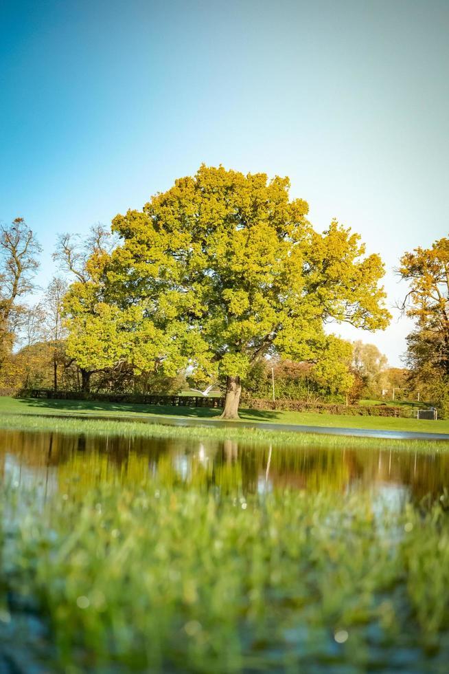 reflekterat träd vid sjön foto