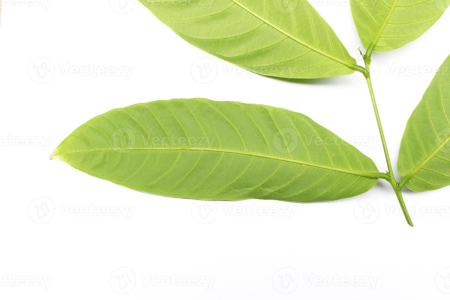 blad isolerad på vit bakgrund foto