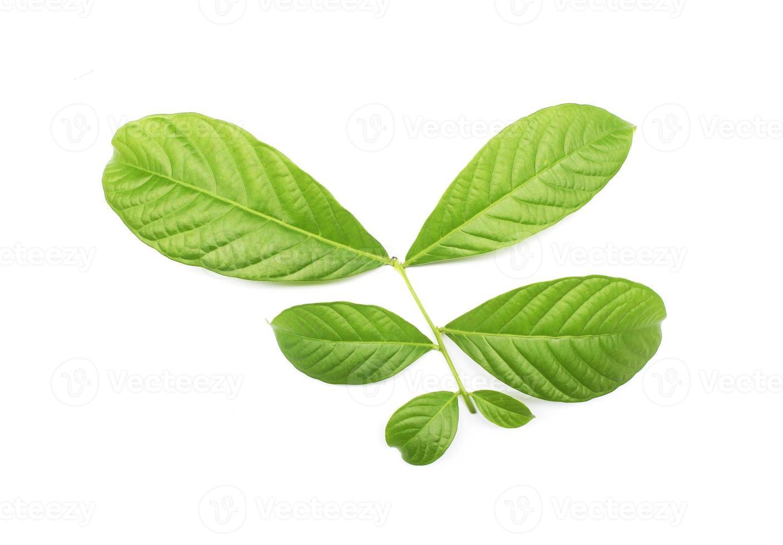 samling tropiska gröna blad på vit bakgrund foto