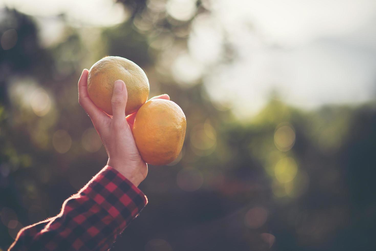 hand som håller färska apelsiner i solen foto