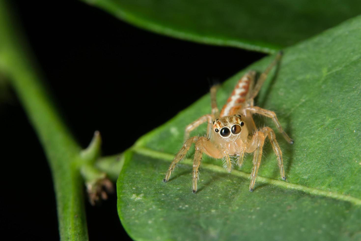 spindel på ett blad foto