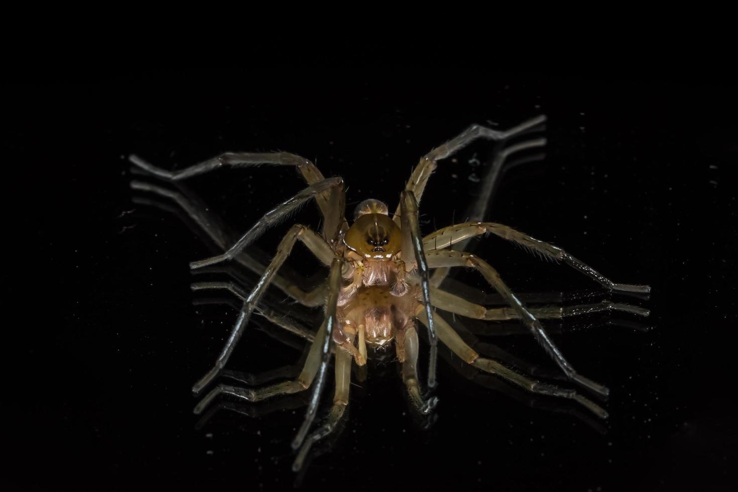 spindel, närbild foto