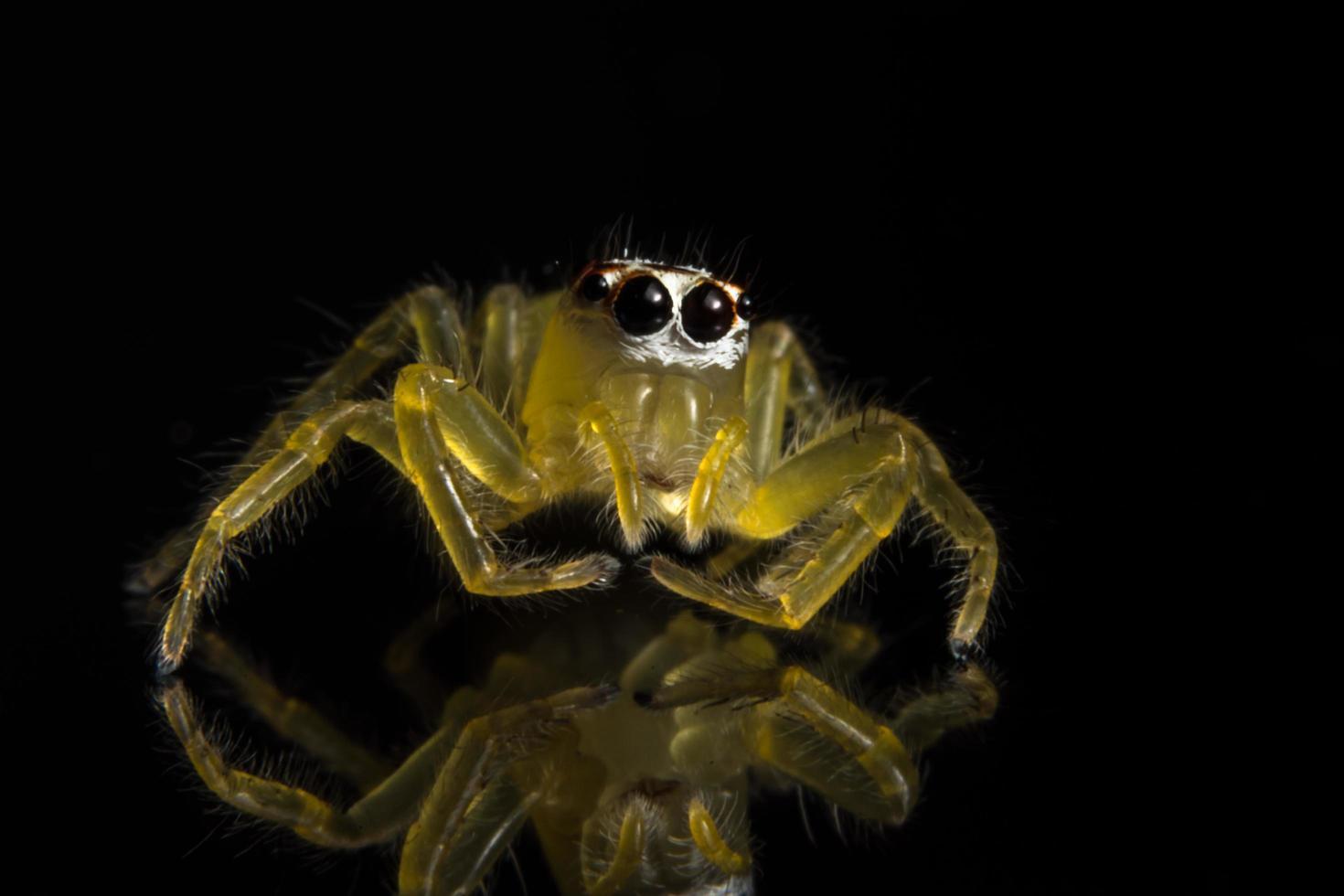 spindel på glasytan foto
