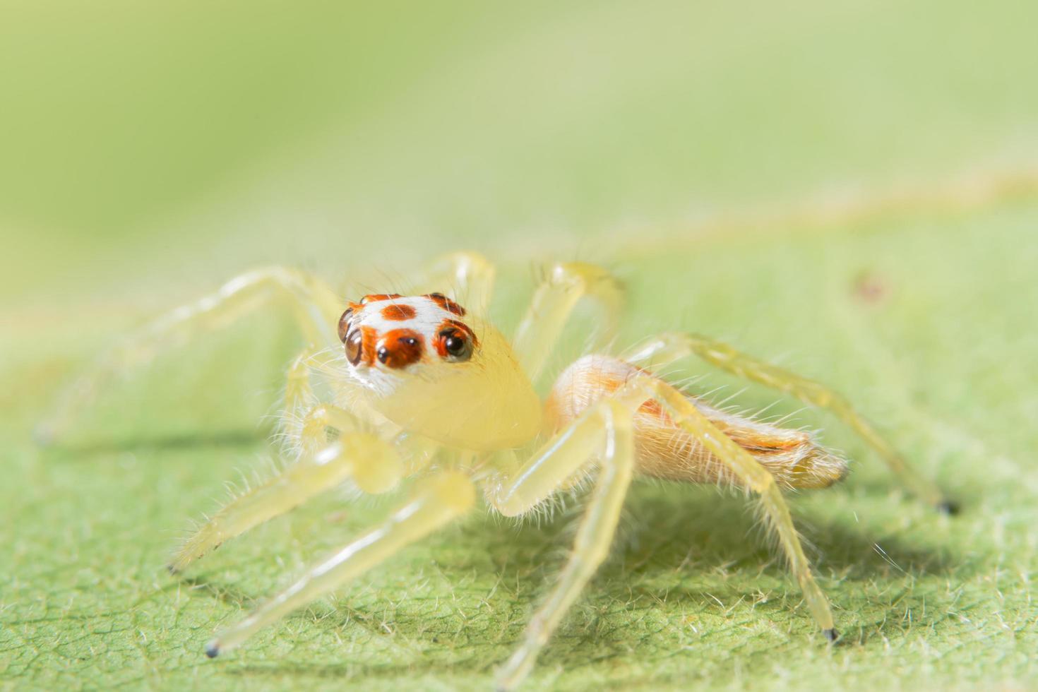 gul spindel på grönt blad foto