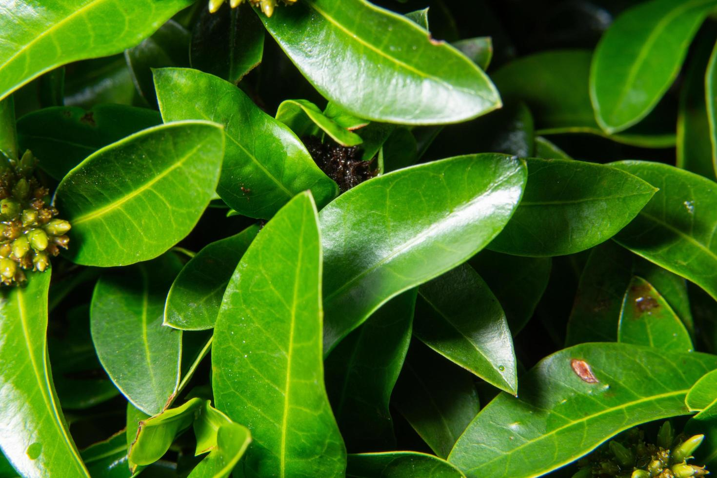grön växtbakgrund foto