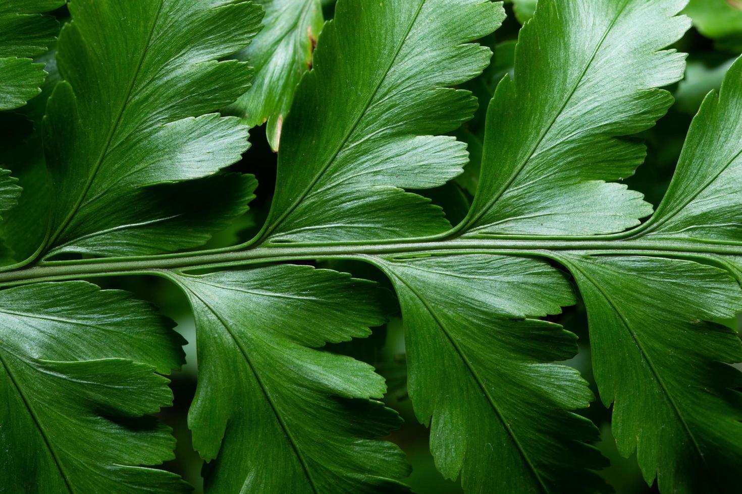 grönt blad bakgrund, närbild foto