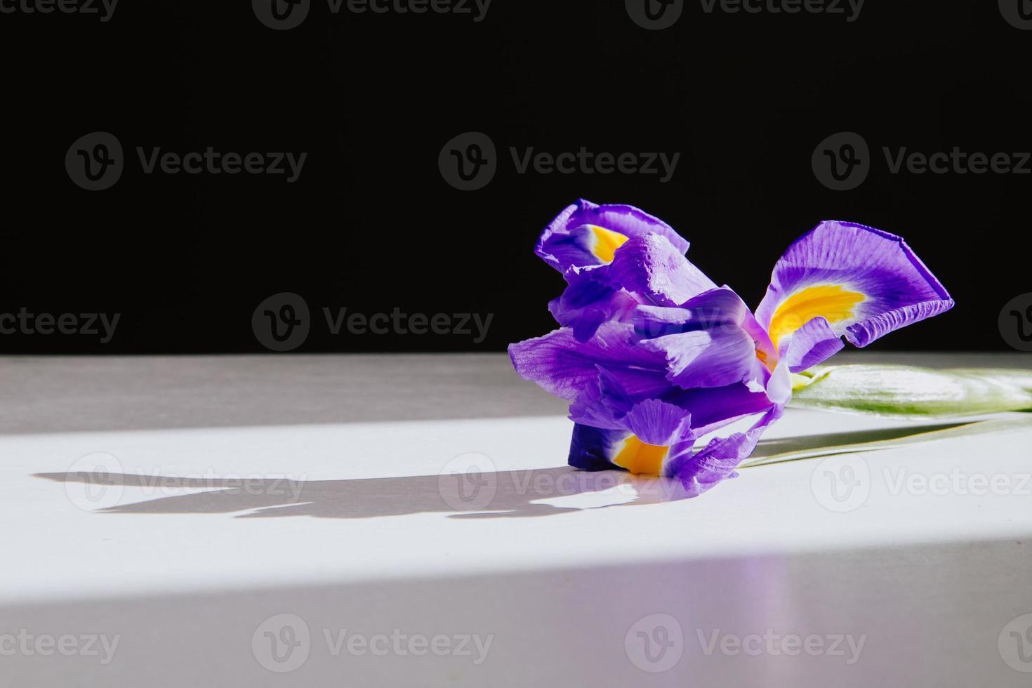 närbild av en lila iris foto