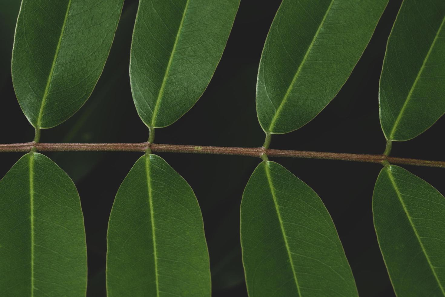 gröna blad med mörk ton bakgrund foto