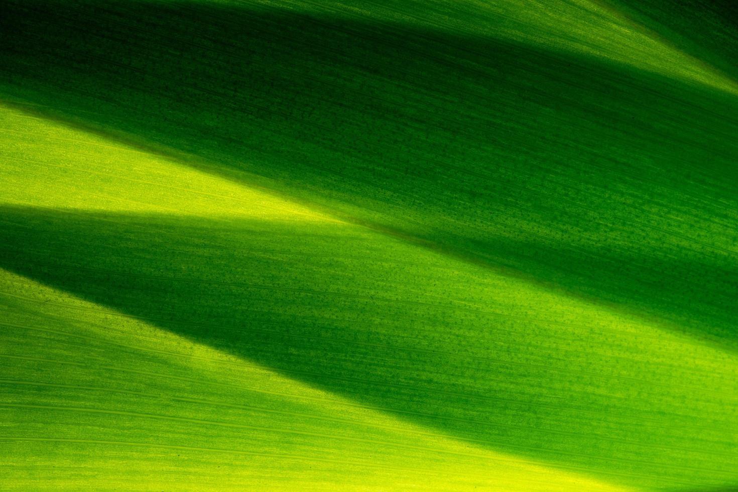 grönt bladmönster foto