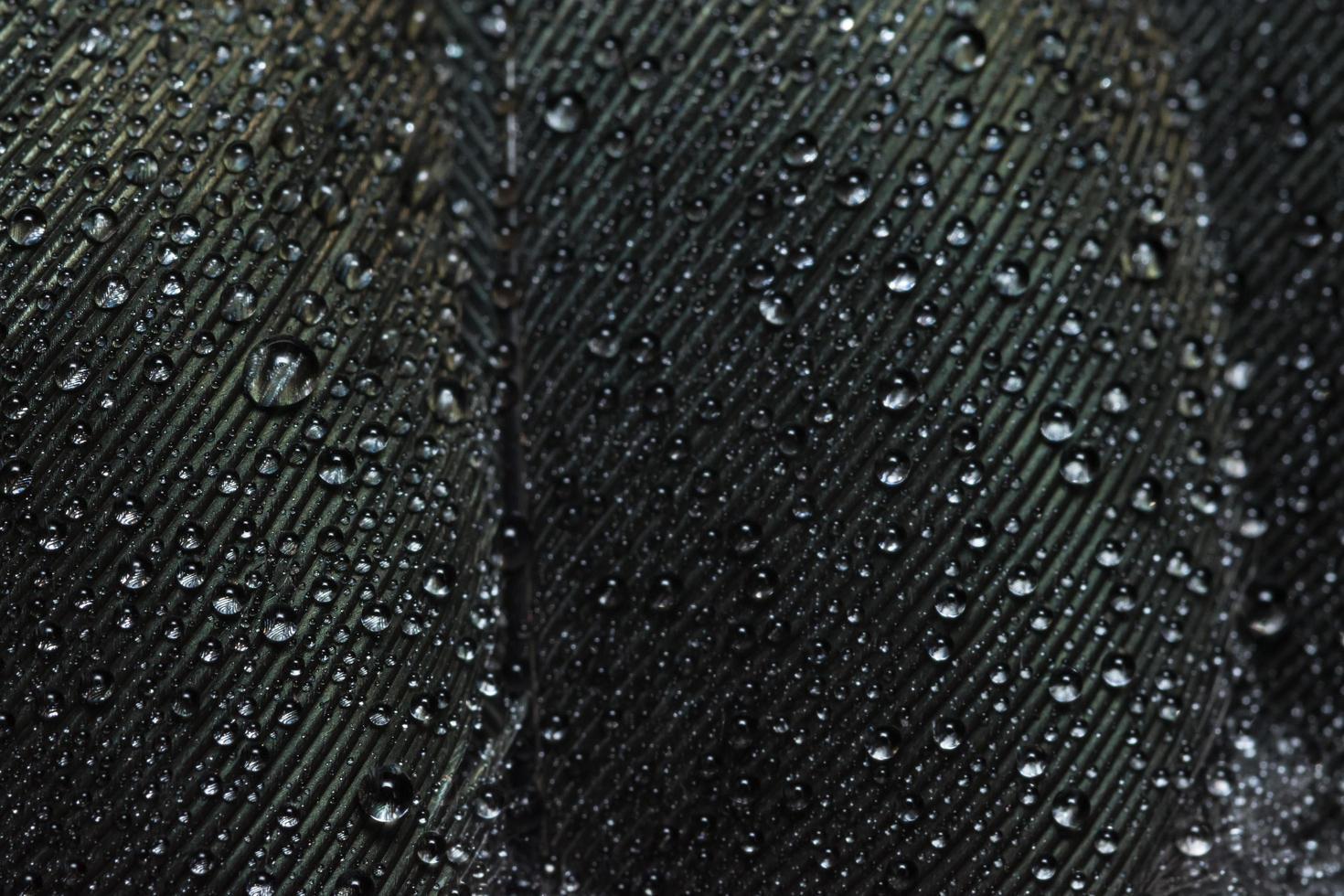 vattendroppar på en fjäder foto