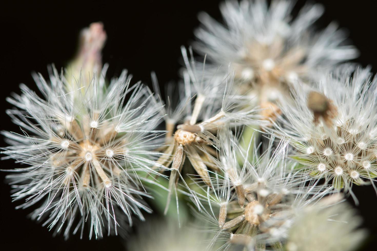 vildblommanärbild foto