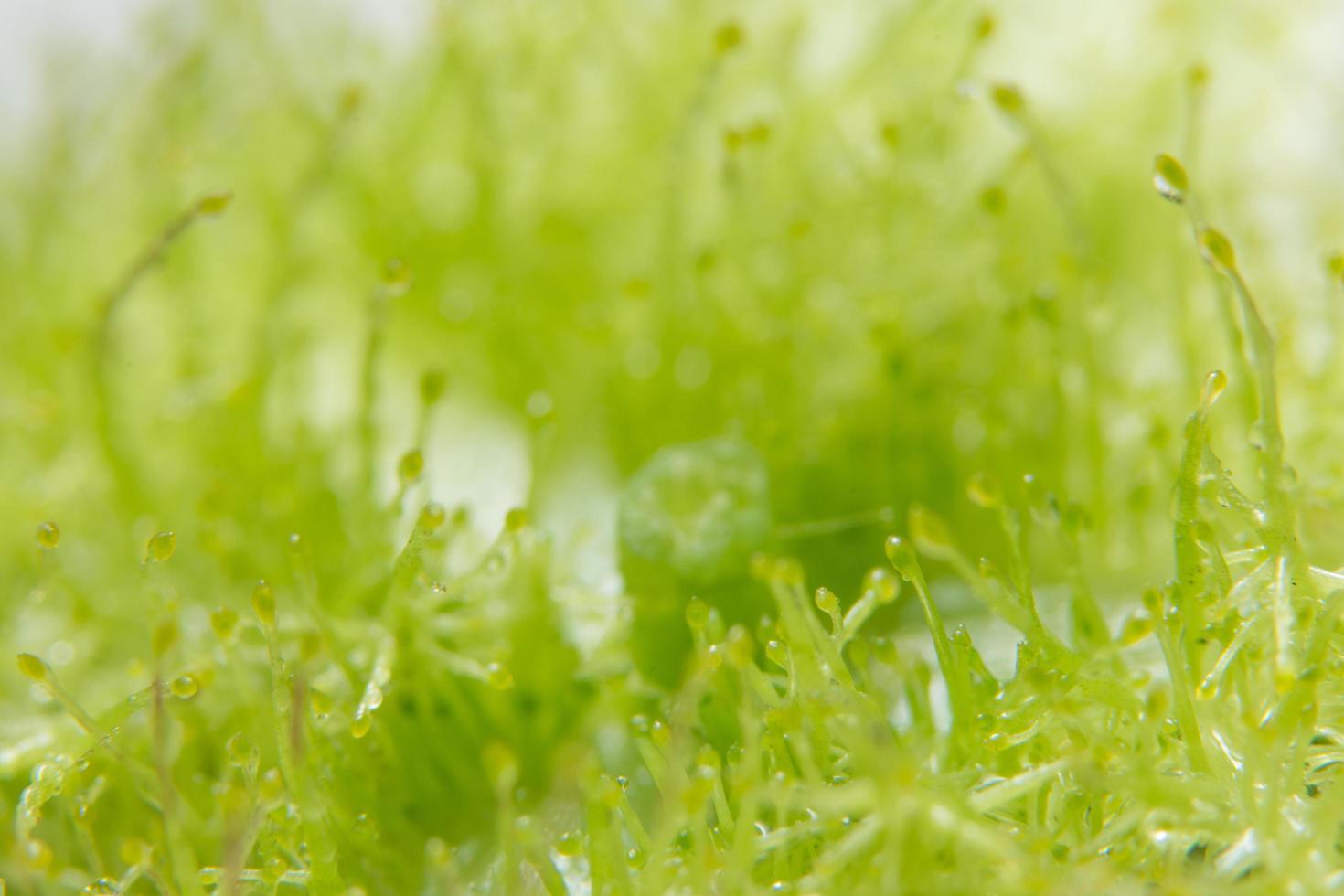 vattendroppar på växter foto