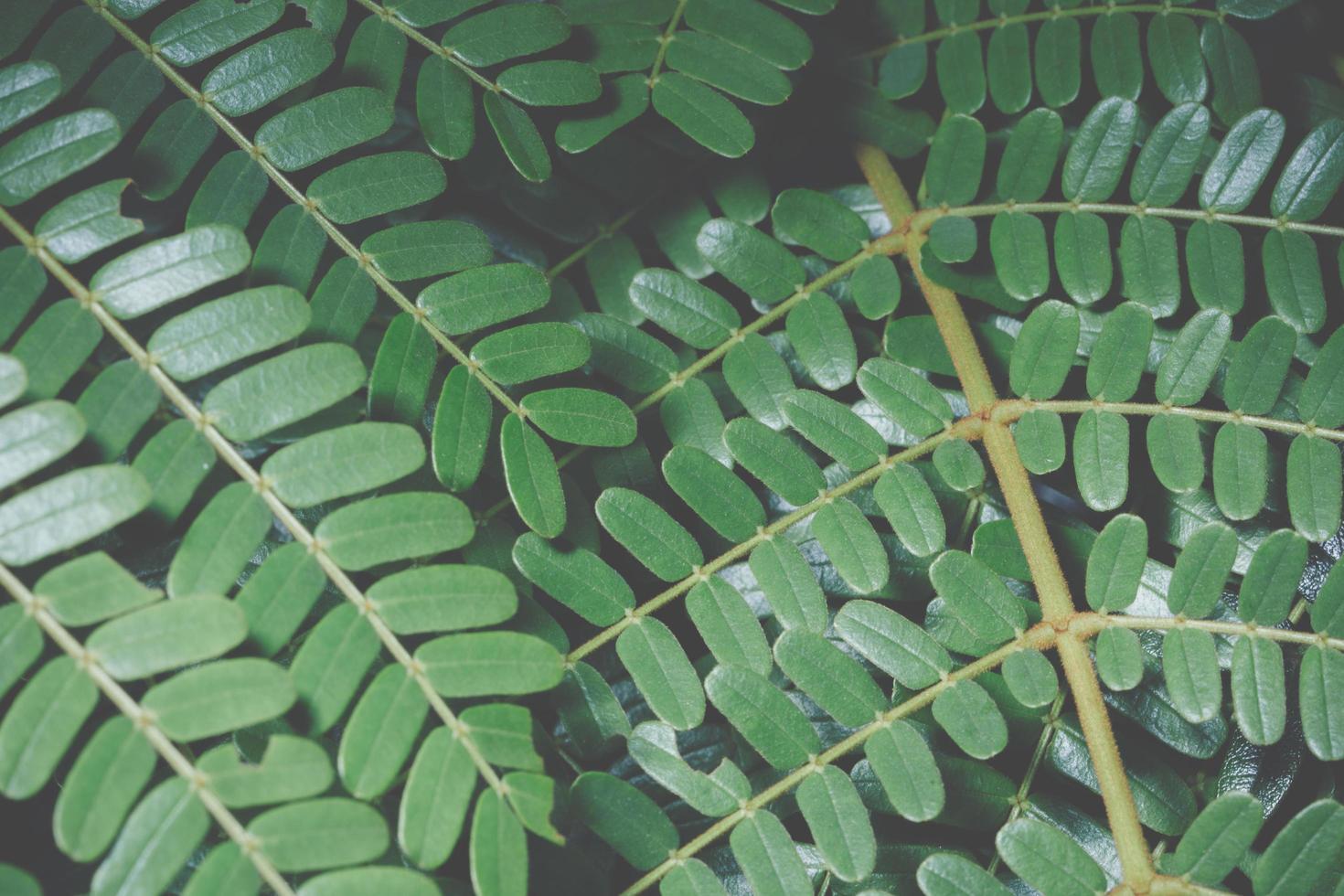 grönt blad bakgrund foto