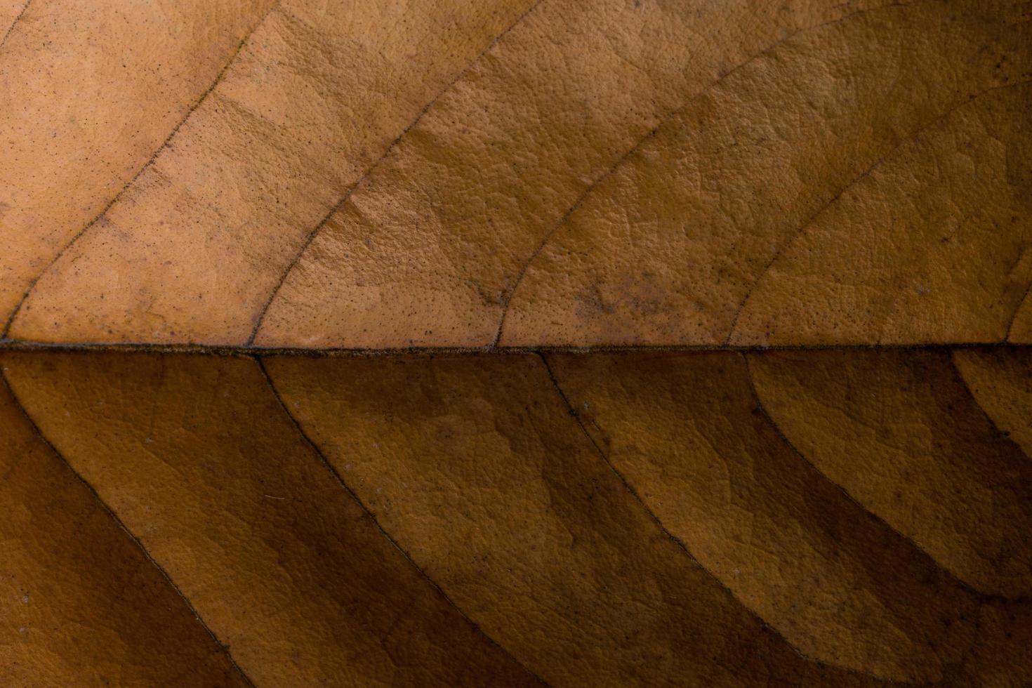 mörk torr blad bakgrund foto