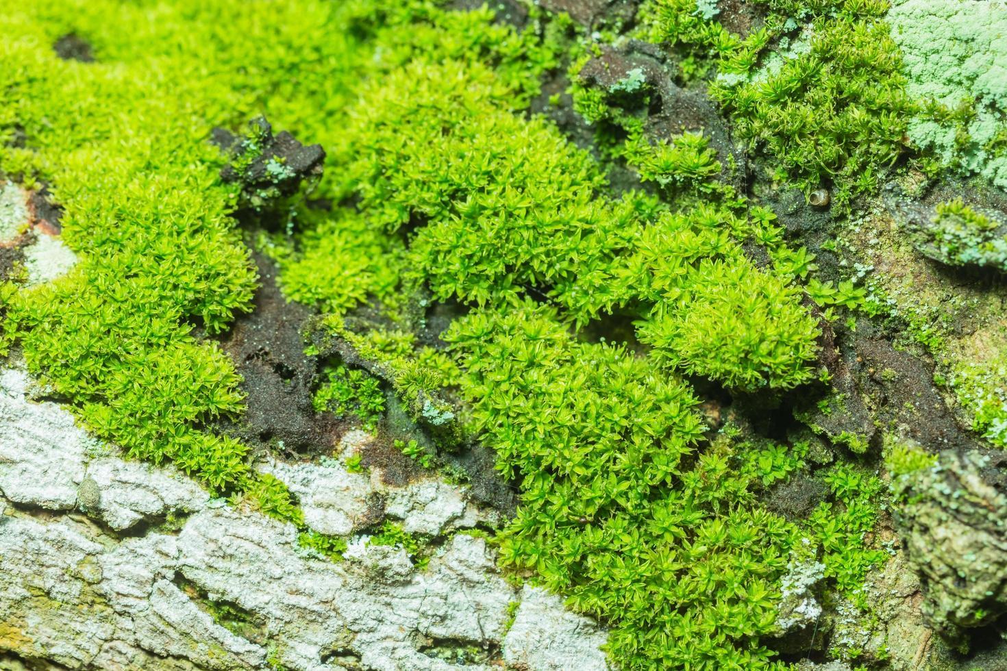 grön moss bakgrund foto