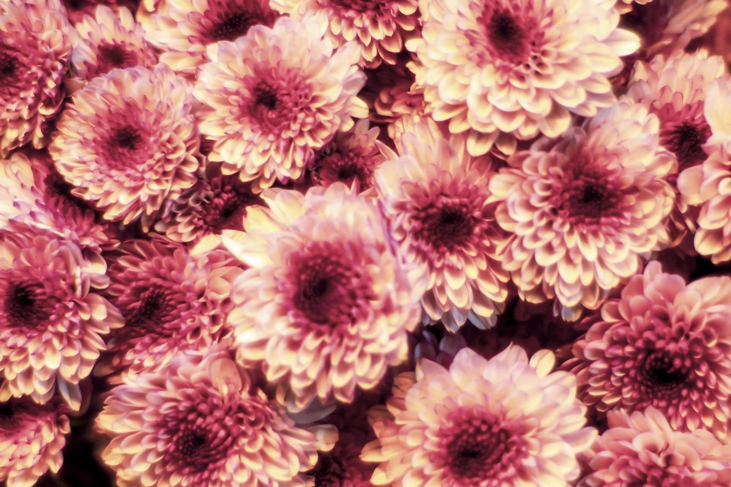 närbild av rosa blommor foto