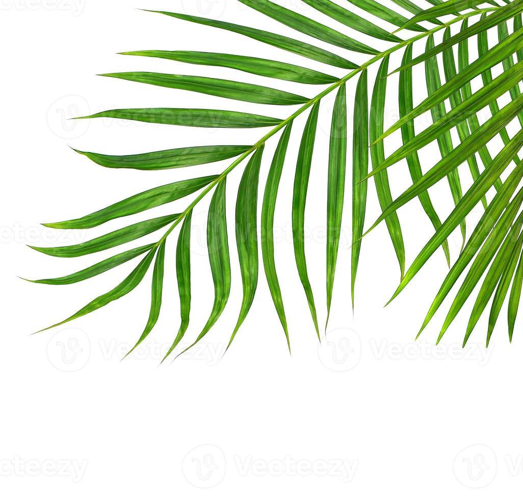 närbild av palmblad foto