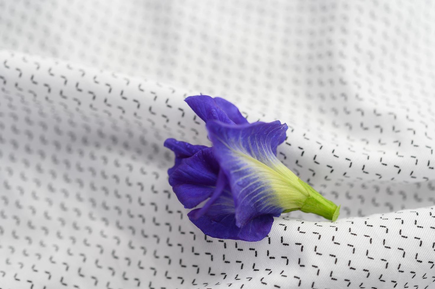 blå fjäril ärta blomma foto