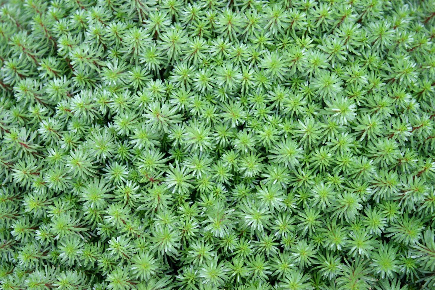 tall blad växt foto
